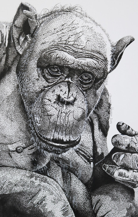 Jessie the Chimpanzee