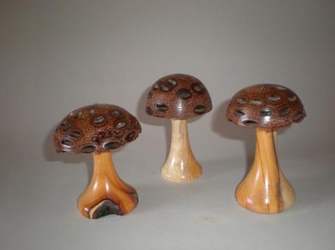 Mushrooms Wood: Banskia Price: £8 each