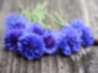 purple flowers on wood.png