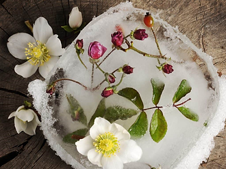 flowers on cake png.png