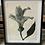 Thumbnail: Set Of 4 Framed Monochrome Floral Wall Art