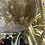 Thumbnail: Hanging Pot Verde