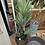 Thumbnail: Yukka Tree With Black Pot Large