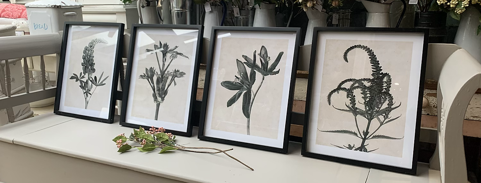 Set Of 4 Monochrome Floral Pictures