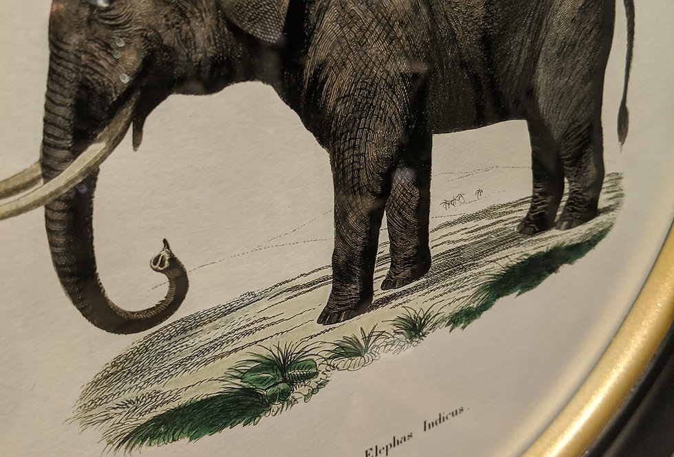 Elephant Print in Round Frame
