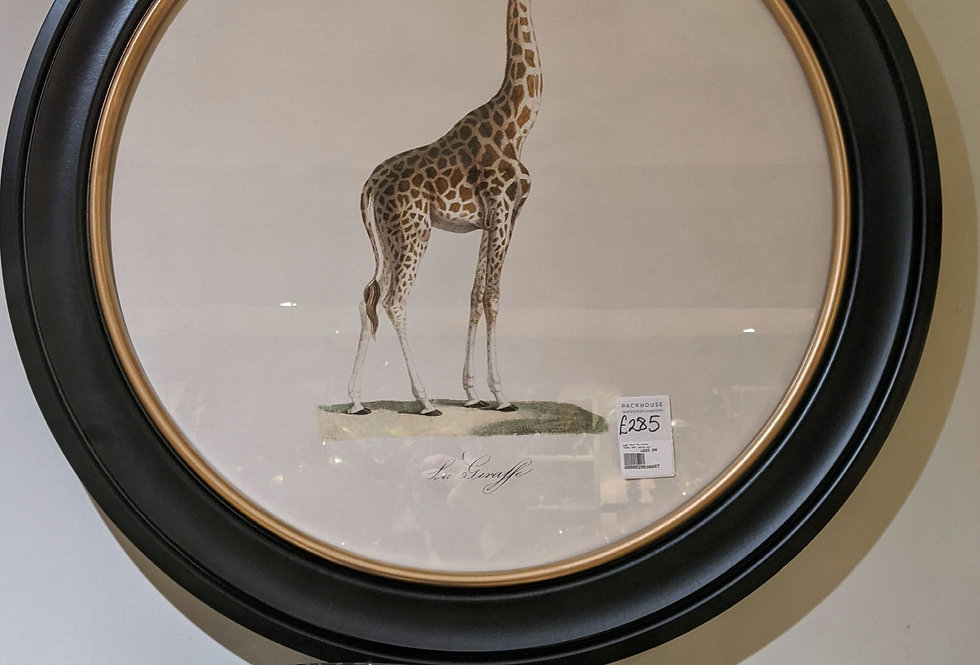 Large Round Giraffe Picture