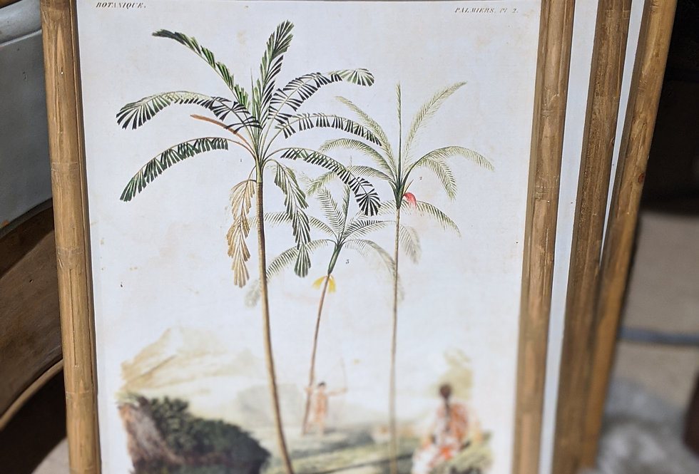 Palm Tree Picture Set of 4