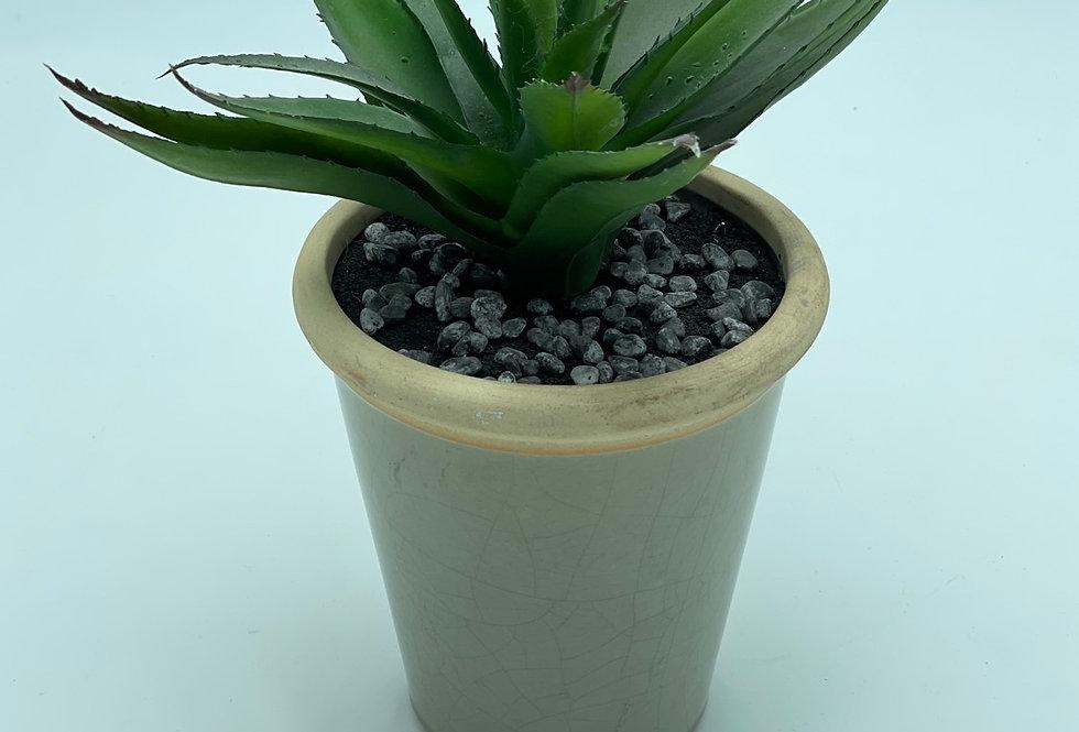 Crackle Succulent