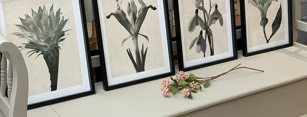Set Of 4 Framed Monochrome Floral Wall Art