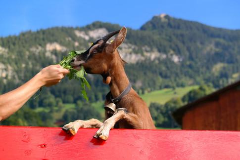 Tiere zum Füttern