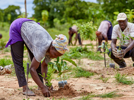 Growing Hope in Ghana: Over 6,000 Tree Species and 97 Hectares of Woodlots Planted