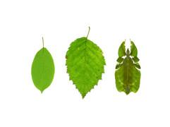 Leaves   /lēvz/