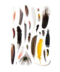 Feathers   /ˈfeT͟Hər/