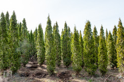 TREES, LLC Vancouver WA11