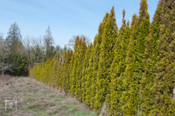 TREES, LLC Vancouver WA4