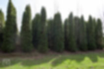 TREES, LLC Vancouver WA7.jpg