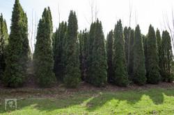 TREES, LLC Vancouver WA7