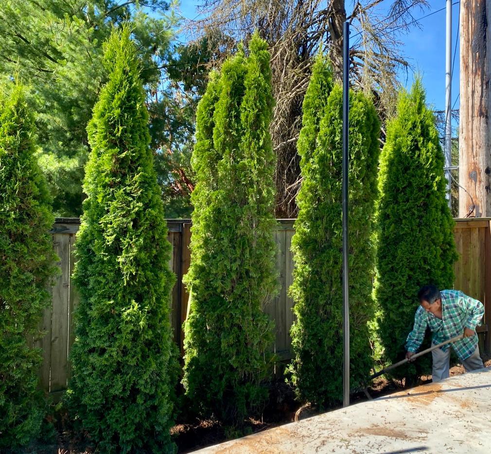 Premium Trees.jpg