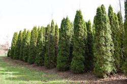 TREES, LLC Vancouver WA6