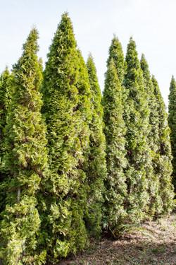 TREES, LLC Vancouver WA3