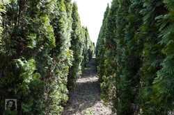 TREES, LLC Vancouver WA1