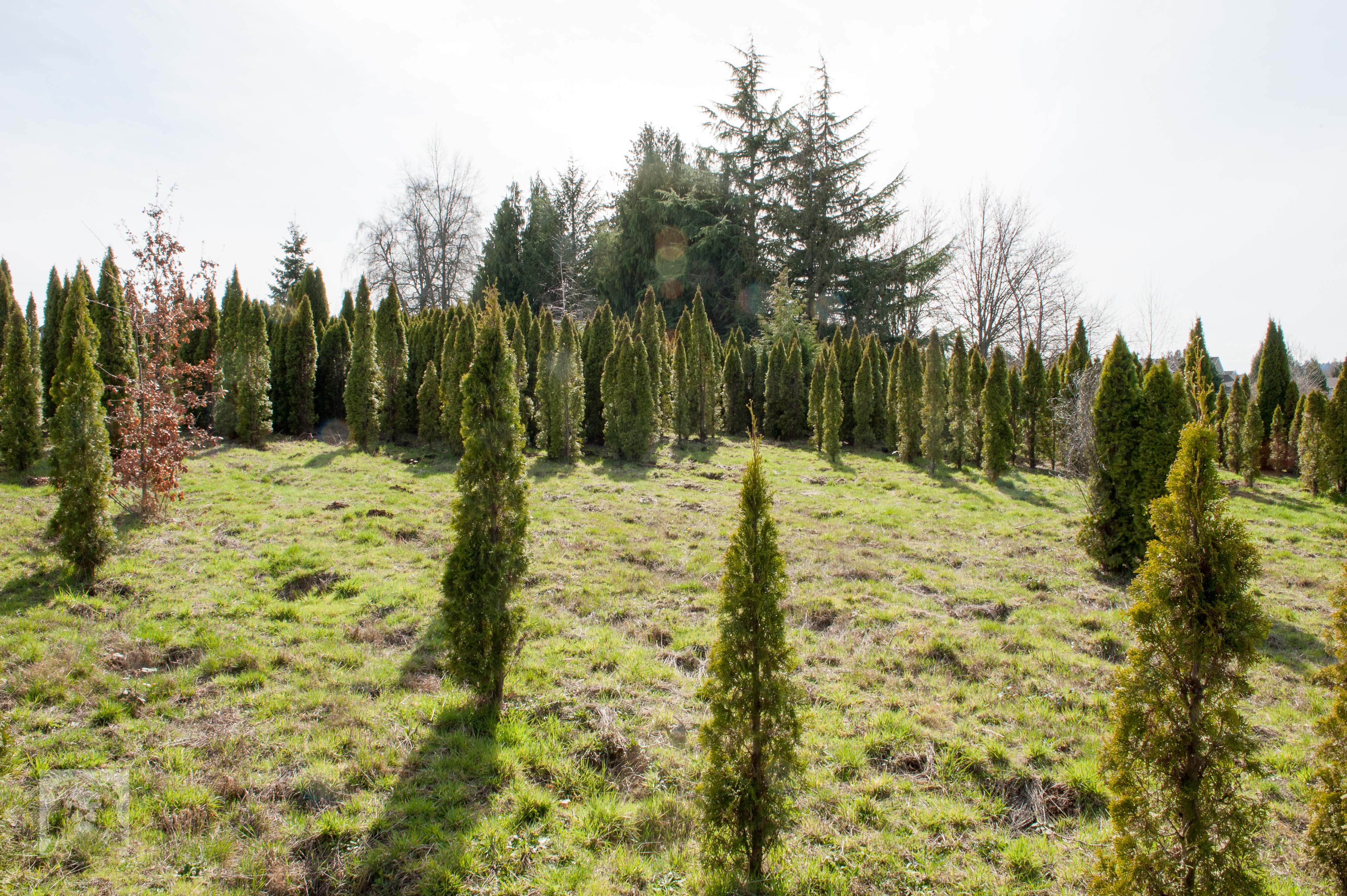 TREES, LLC Vancouver WA13