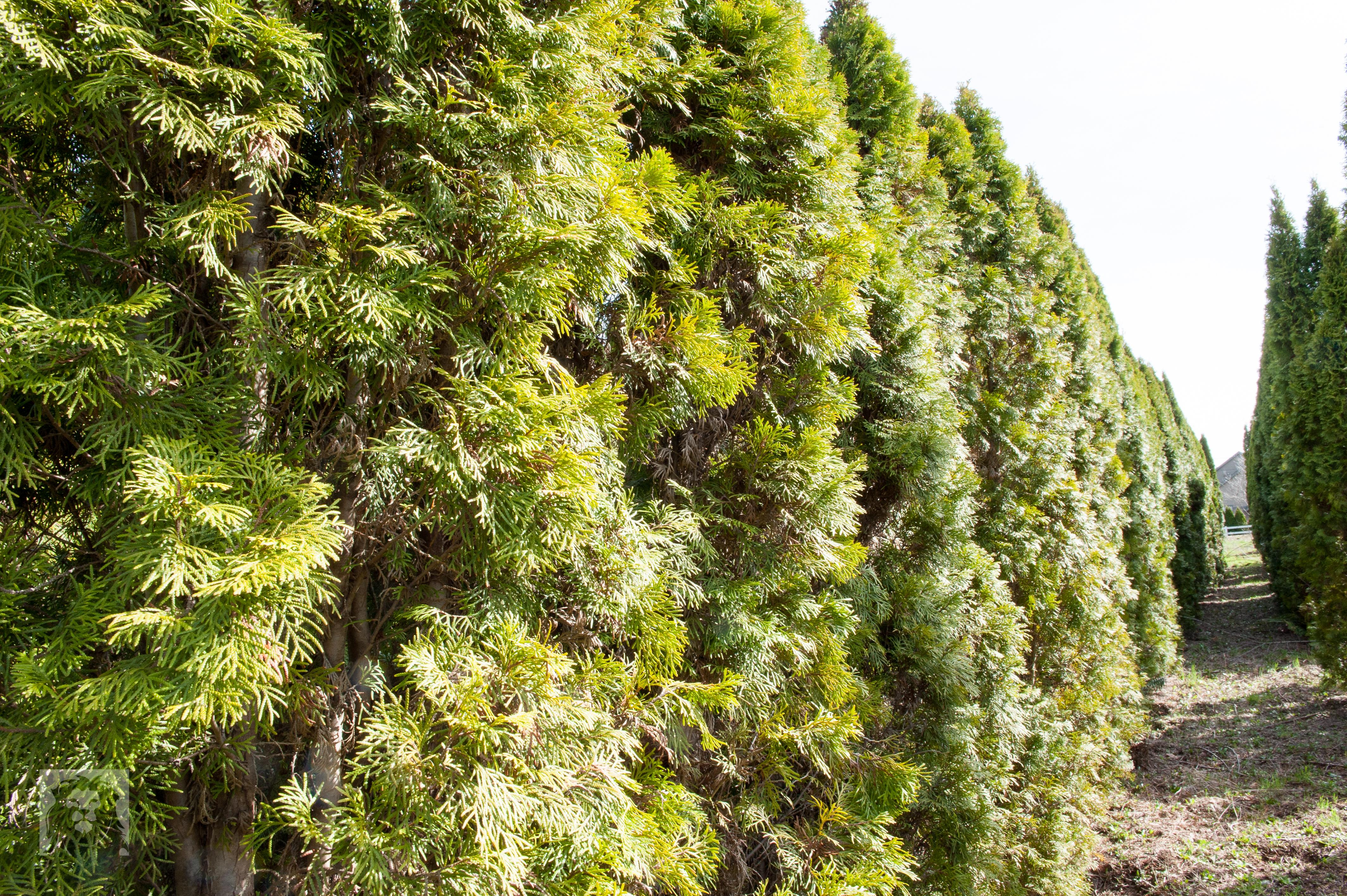 TREES, LLC Vancouver WA2