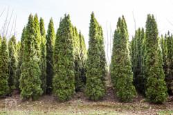 TREES, LLC Vancouver WA8