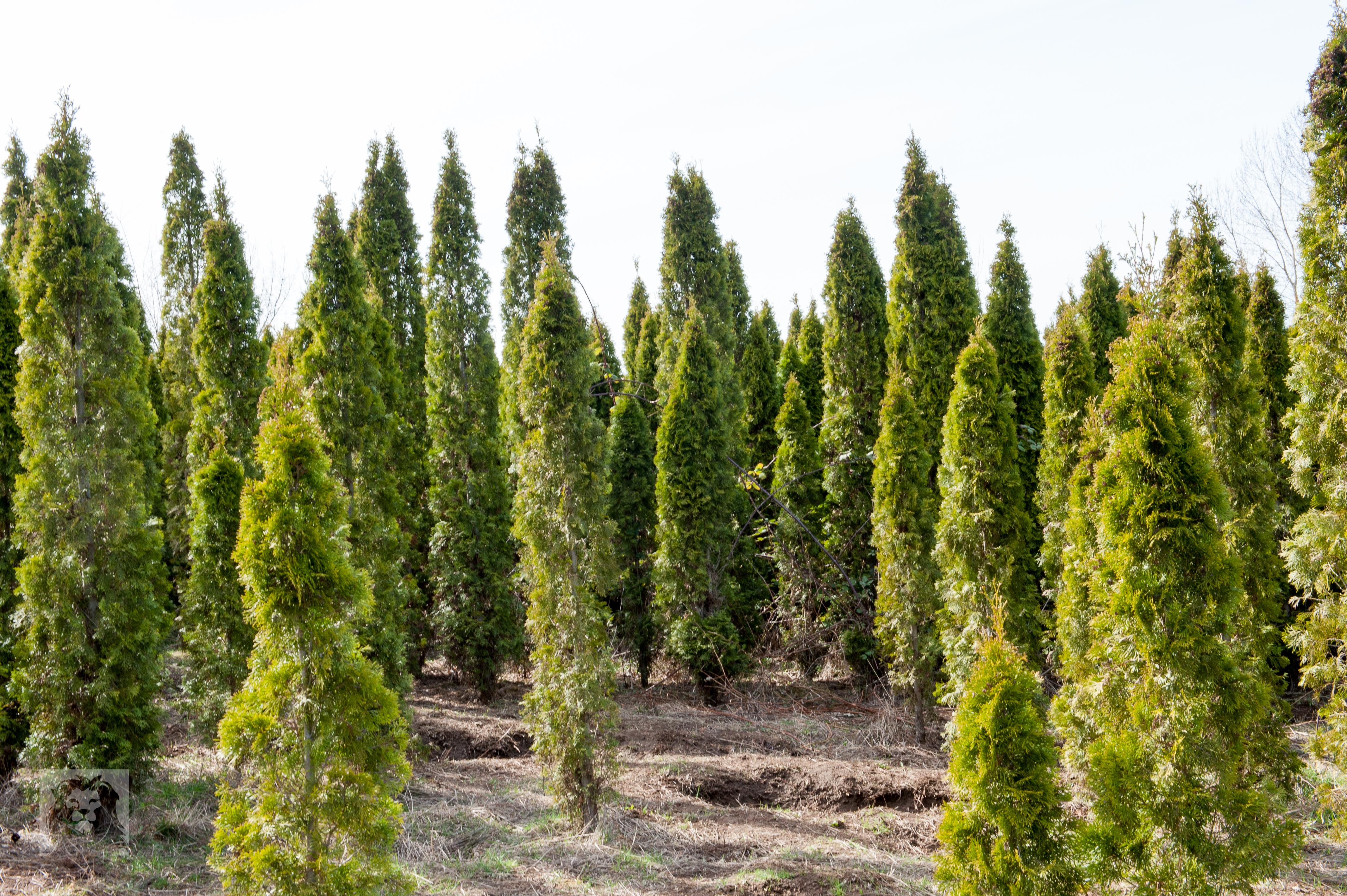 TREES, LLC Vancouver WA10