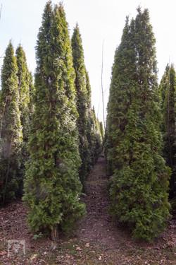 TREES, LLC Vancouver WA9