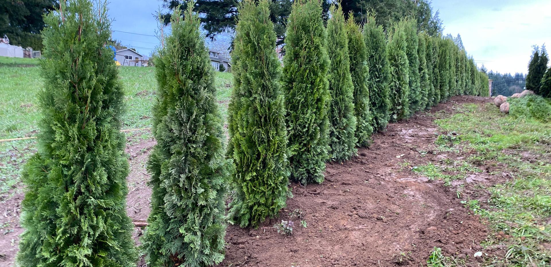 TreesLLC.us.jpg