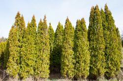 TREES, LLC Vancouver WA5