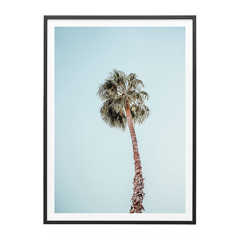 Palm Tree framed picture