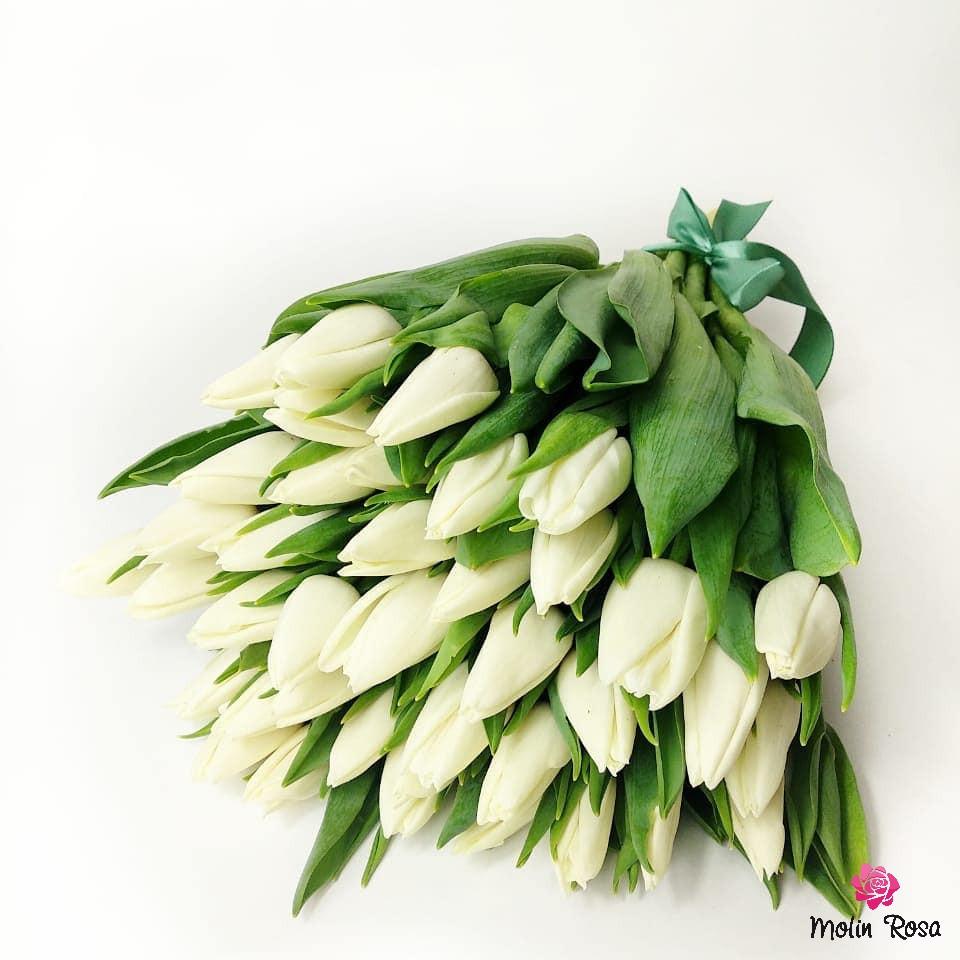 Tulipano bianco: significato. Quando si regalano i tulipani bianchi? Tradizionalmente i tulipani bianchi regalano alle ragazze dei ragazzi innamorati. Un indizio più puro e più luminoso dei sentimenti più sinceri di un mazzo di questi bei fiori non può essere inventato.