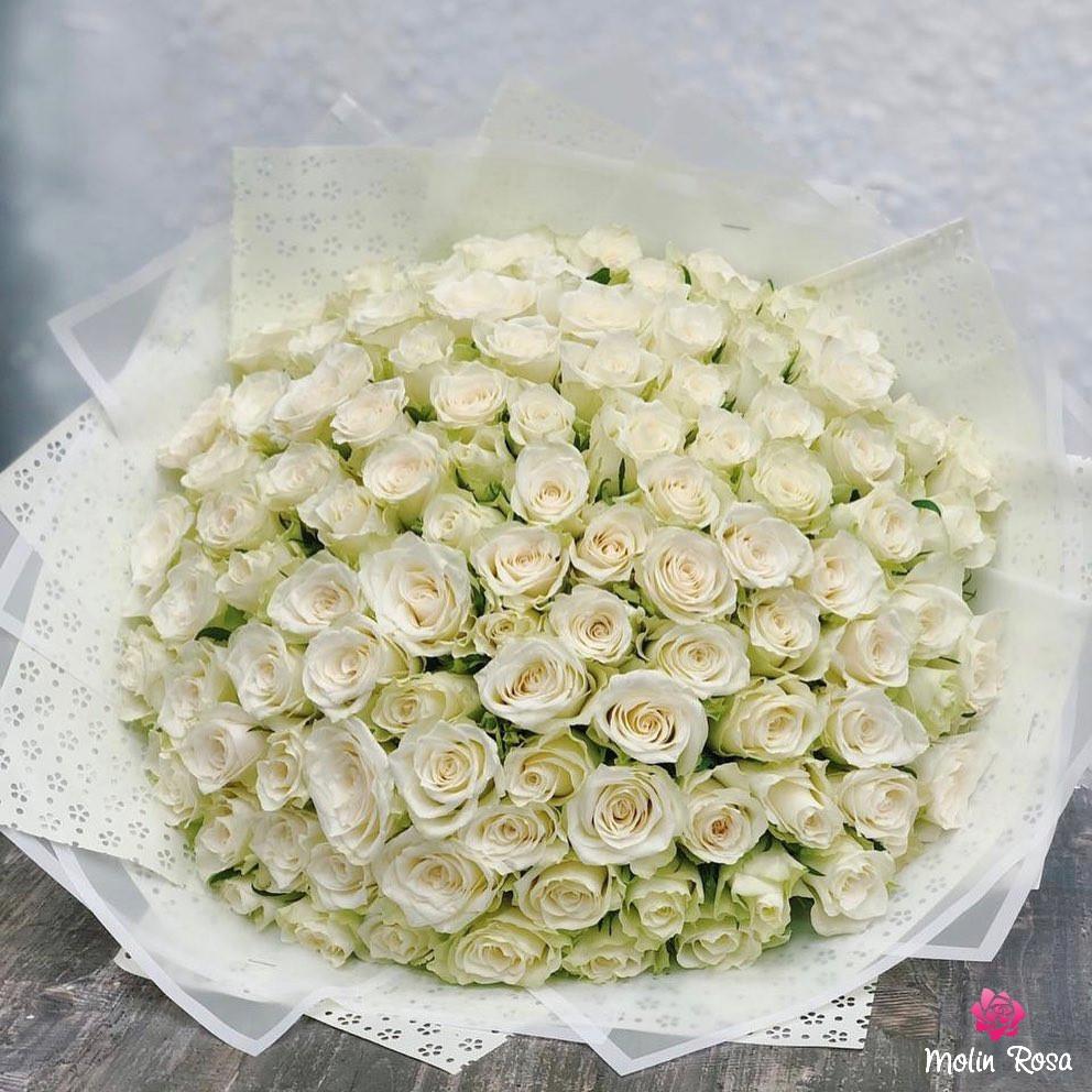 Significato della rosa bianca, rose inglesi bianche, rosa bianca, rose bianche, rose bianche e rosa, rose bianche e rosse, rose rosse e bianche.