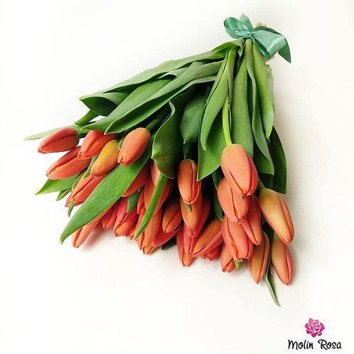 Tulipani Rossi | Red tulips, Flower Delivery