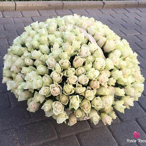 Rosa Bianca 200pz. | White Rose 200 pcs. | Flower Delivery Milan