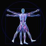 Body Engineering (1).jpg