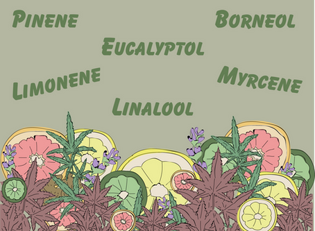 What the Heck is a Terpene?