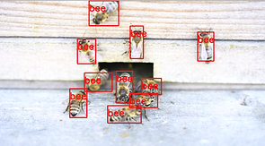 Bees Location 40-22.png