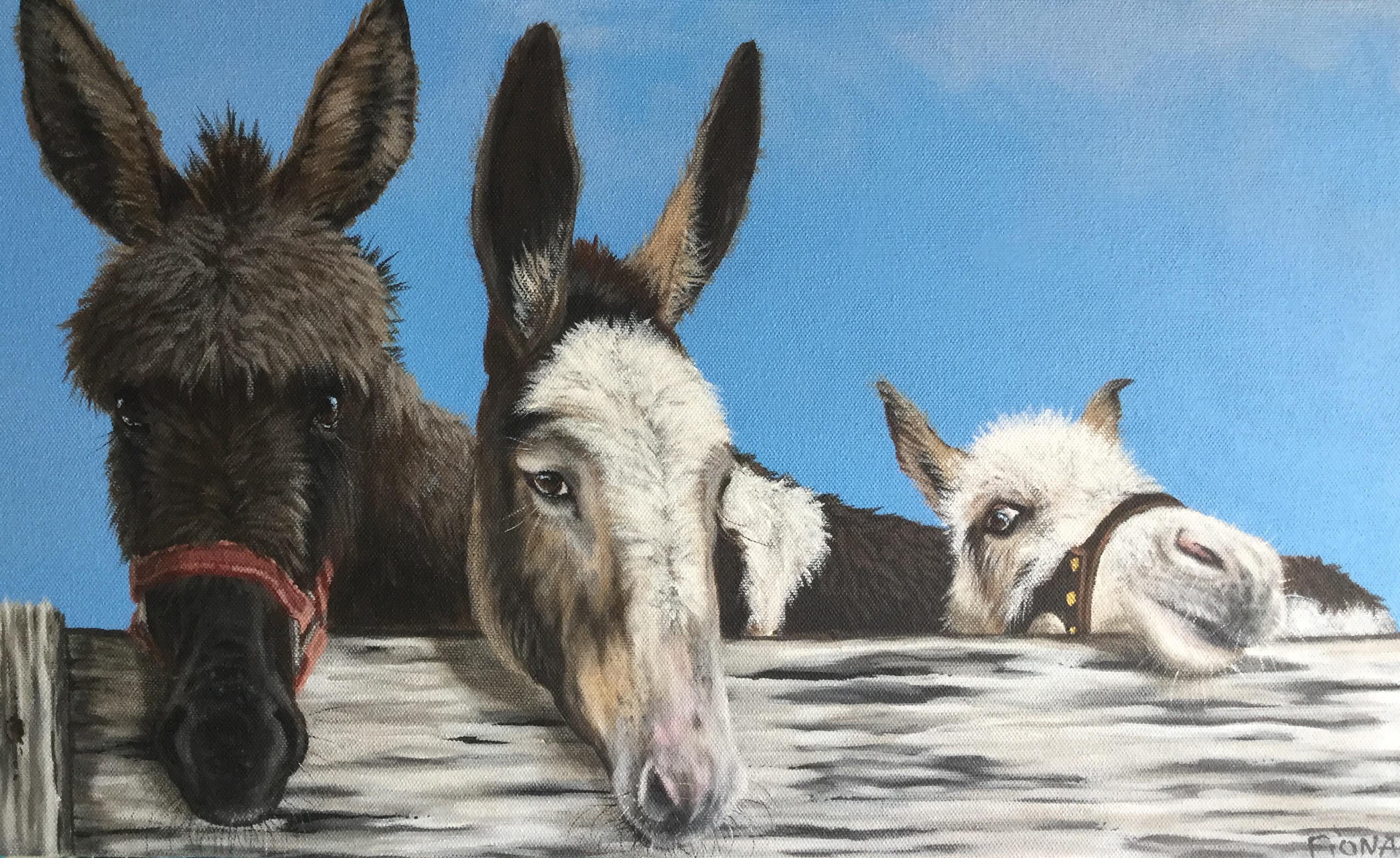 its a donkey thing