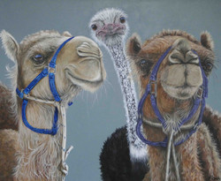 you aint no camel