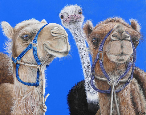 Camels & Ostrich Greeting Card