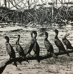 mangrove mafia