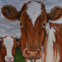 big cow little cow