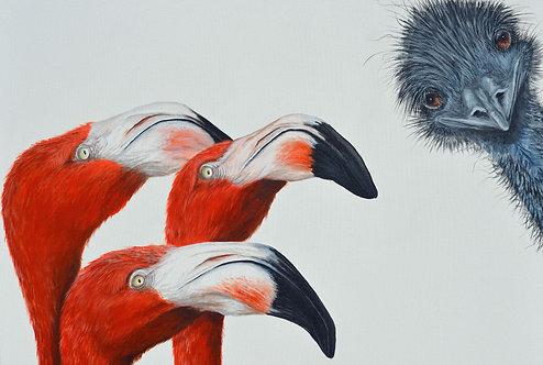 Flamingos & Emu Greeting Card