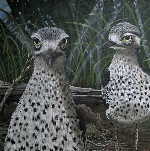 #curlew #birdart  #fionagroomartist #acrylicart