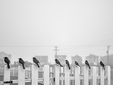 Eight Black Birds