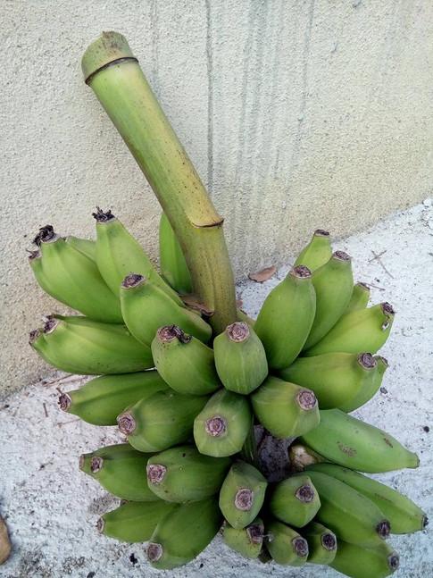 Bananas do local