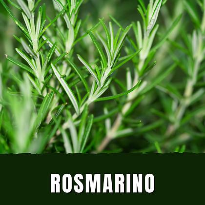 Rosmarino Officinalis